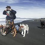 Ocean Beach Run.  Dogs with visers thumbnail