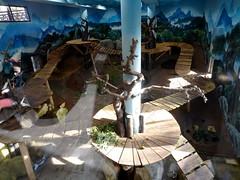 rhenen_2_062 (OurTravelPics.com) Tags: rhenen interior residence giant panda xing ya pandasia ouwehands dierenpark zoo