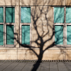 north by north-west (caeciliametella) Tags: lorrainekerr photography 2019 11 square shadow shadows abstract astratto urban urbano tree caeciliametella northbuilding quayside newcastleupontyne city scape notshieldfield