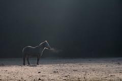 (martine_ferron) Tags: cheval matin contrejour