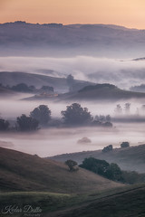 Valley fog (wandering indian) Tags: fog winter winterfog petaluma california nature landscape sigma nikond810 kedardatta