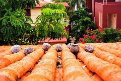 2018-03-15_03-21-03 (ilehoux) Tags: cuba varadero coconuts colors vacation