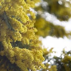 Thursday (Darryl Scot-Walker) Tags: flower bokeh helios sony a6000