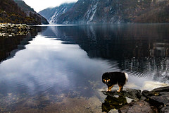 Fjord Dog (langdon10) Tags: aiko countryside feøy finnishlapphund mountains norway water calm dog fjord rock shoreline winter åkerfjord