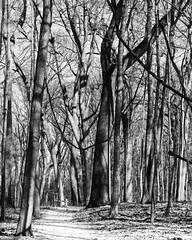 Trees (BRB1952) Tags: mayburystatepark michigan