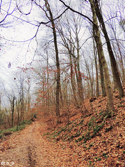 chemin feuillu (dr o_o) Tags: nature bois forêt chemin naturepic wood path forest