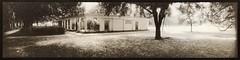 Fragrant Garden (efo) Tags: bw film altprocess vandyke seleniumtoned mysteriouscamera swinglenspanoramic savannah park fragrantgarden