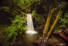 Sempervirens Falls (g-liu) Tags: bigbasin sony a6500 spring water waterfall longexposure naturallight outdoor nature wild logs trees flora leaves forest redwoods april 2019 darktable soft