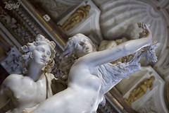La Morbidezza del Marmo - Apollo e Dafne - Gian Lorenzo Bernini (Claudio De Rossi) Tags: museo galleria borghese bellini bernini canova sculture marmo roma italia apollo dafne