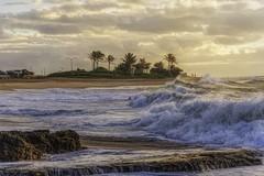 Mahalo  DSC_1484 (BlueberryAsh) Tags: sandybeach sandybeachsunrise sunrise hawaii oahu coastline palm trees ocean water waves cloudsstormssunsetssunrises rocks cascade light nikond750 nikon24120