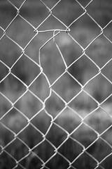 Mutation (belleshaw) Tags: blackandwhite hemet shootwhereyoulive fence chainlink metal mesh damage bent changed detail texture abstract walkingthedog