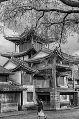 Shaxi (Rod Waddington) Tags: china chinese shaxi old town qing dynasty temple blackandwhite monochrome mono tree woman child architecture traditional happyplanet asiafavorites