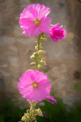 Wall flower... (Ruth Flickr) Tags: europe france giverny monet tpz artsy flora flower garden holiday hollyhock house impression jsart3 mallow painterly pink summer wall