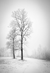Winter Meadow (stoge1) Tags: solitude virginia blackandwhite bw trees winter