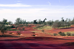 red zone (photomaster22) Tags: red grass golf course effect sky trees park land sunny day winter outside parkland