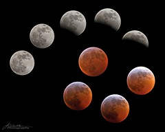 Eclipse Time Lapse_A_Merged_WM (Nomad Joe) Tags: moon fullmoon wolfmoon bloodmoon eclipse lunareclipse winter
