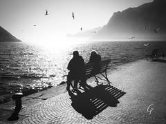 Meeting... (Beppe Cavalleri - www.beppecavalleri.com) Tags: fujinon4528 lakegada cloudy birds bw lake wonderful sea blackwhite reportage fujifilmgfx50r beautiful cloud sky fog street wwwbeppecavallericom beppecavalleri landscape