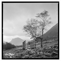 Crummock_Water_HP5-3 (D_M_J) Tags: crummock water lake district lakedistrict lakeland cumbria landscape north west film camera 120 medium format 6x6 square roll hasselblad 500 cm 80mm ilford hp5 plus 400 kodak hc110 epson v850 vuescan black white bw blackandwhite mono monochrome