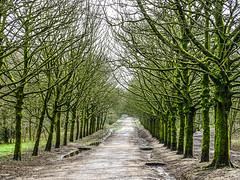 Mossy Trees (AffieFilms) Tags: rivington moss trees woodland pathway countryside green colour