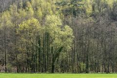 An der Wupper (4) (Pippilotta aus dem Tal) Tags: sel90m28g