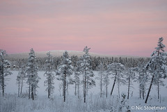 Midday sunlight (Nic Stoetman) Tags: finland äkäslompolo winter snow tree lake sunlight nature natuur lapland cold color pink landscape landschap outdoor mountain