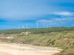 Portugal 2017-9052205 (myobb (David Lopes)) Tags: 2017 allrightsreserved europe nazare portugal absence alternateenergy beach bushes copyrighted electricity energy green nature outdoor plant renewableenergy sand scenicnature shrub sky tourism touristattraction tranquilscene tranquilty traveldestination vacation windfarm windturbines windmill ©2017davidlopes
