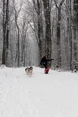 IMG_0054_AutoColor (LifeIsForEnjoying) Tags: snow mushing dog sledding dogs snowboard sled sitka nike kaskae