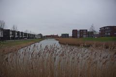 Heinkenszand (Omroep Zeeland) Tags: grijs en bewolkt