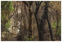 La Cañada_0459 (Thomas Willard) Tags: california lacanada park trees water lacañada woods