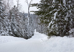 Snow covered road and forest trees in the wilderness of the north woods of Northern Minnesota, United States (thstrand) Tags: alone american bwca bwcaw boundarywaters boundarywaterscanoearea cloudy cold conifer coniferousforest conifers cookcounty evergreens forest forests landscape landscapes mn minnesota nobody north northamerica northamerican northern onewayout outdoors outside overcast pinetrees pines plowedroad quiet recedingperspective road roads ruralscene scenery scenicviews seasons snow snowcover snowcovered snowfall superiornationalforest theroadahead touristdestination trail trails transport transportation traveldestination us usa unitedstates white wilderness winter