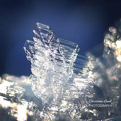 ~ ice crystal ~ Riddarhyttan Sweden (Tankartartid) Tags: vinterbild winter vinter iskristall icecrystal fruset frozen is ice skärpedjup depthoffield dof bokeh closeup närbild macro natur nature norden nordic västmanland europe sweden riddarhyttan