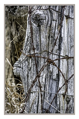 corner post was well used in its day (TAC.Photography) Tags: weathered rust rusty rustywire barbedwire rural