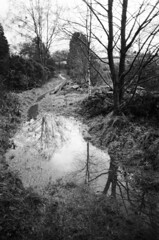 07 Path, puddle, tree (I ♥ Minox) Tags: film 2018 olympus om1 om1n olympusom1n olympusom1 om172 tmax tmax400 kodaktmax400 monochrome blackandwhite