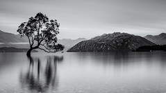 Morning calm (David Feuerhelm) Tags: monochrome blackandwhite mono bw noiretblanc schwarzundweiss blancoynegro water lake tree mountains longexposure serene calm morning wanaka centralotago southisland newzealand nature nikon d750 2470mmf28