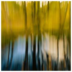 ICM Trees , Summerlee (wwshack) Tags: coatbridge icm intentionalcameramovement monklandscanal museumofscottishindustriallife northlanarkshire scotland summerleeheritagepark summerleeindustrialheritagemuseum treeabstracts trees