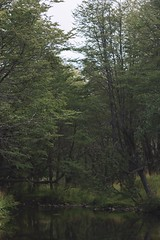 Coyhaique y alrededores (Christopher León Vilches) Tags: arboles agua rio patagonia carretera austral coyhaique aysen chile paisajes lugares