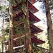 Gojonutu (Five Story Pagoda), Nikko Tosho-gu