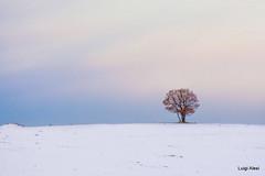 lonely (luigi.alesi) Tags: italia italy marche macerata visso macereto parco nazionale dei monti sibillini national park inverno winter neve snow albero solitario lonely tree natura nature nikon d7100 tamron sp 70300