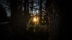 End Of Days (Tidyshow) Tags: sun sunset trees dark darkness forest woods woodland scotland moray buckie light glow sony a99ii sigma 24105 f4 art reflections