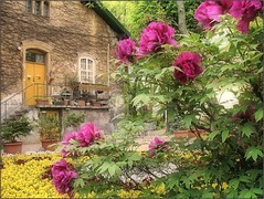 (Tölgyesi Kata) Tags: paeonia bazsarózsa withcanonpowershota620 botanicalgarden füvészkert budapest botanikuskert peony paeony pfingstrosen flower blossom fleur virág spring tavasz pink