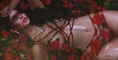 A una rosa no le hace falta predicar. Le es suficiente difundir su perfume.  (Mahatma Gandhi) (pattybartavelle) Tags: