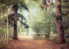 Potpourri (Ingeborg Ruyken) Tags: 2018 autumn october woods berlicum fall flickr herfst ochtend morning wamberg tree forest oktober natuurfotografie 500pxs instagram shertogenbosch bos