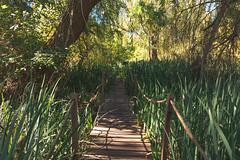 Eco Area (Sol Caseres) Tags: nature naturaleza rio verde green parque reserva vegetacion avellaneda argentina buenoaires madera bosque hierba arbol