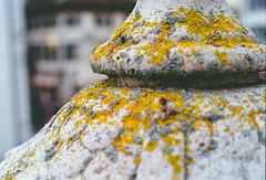 Moss (Bephep2010) Tags: 2019 kodakgold minolta minoltamd50mm114 minoltax700 moos photoexif schweiz solothurn switzerland winter x700 analog analogue gelb moss yellow kantonsolothurn ch