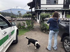 Chasqui (fordc63) Tags: mountain mountains volcano volcanic geology cotopaxi ecuador southamerica latinamerica andes andesmountains inca culture travel international rondador guesthouse dog animal fauna wildlife mammal snow altitude