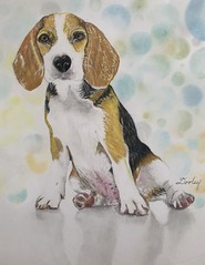 """""""Scout""""   edith-dooley.pixels.com Prnts and more are available. (Edie54) Tags: colored pencil dog beagle sentry scout detective sleuth hound scent hunting intelligent gentle loving breed loyal scenthound companion game prey hunt rabbit muscular droopy ears active roam curious even tempered loved cute bokeh background shadow gaped throat social sweet stubborn puppy"""