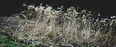 Tales from the Riverbank (jayteacat) Tags: youlgrave youlgreave river bradford grass talesfromtheriverbank riverbradford nikond810 derbyshire
