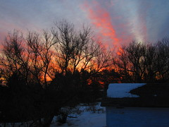 IMG_4338 3-24-2019 (PGK88) Tags: dawn sunrise morning early trees branches sky glow sunlight orange red 2019 nature outdoors silhouette landscape