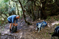 20190113-01-Hiking up Mt Wedge (Roger T Wong) Tags: 2019 australia mtwedge rogertwong sel24105g sony24105 sonya7iii sonyalpha7iii sonyfe24105mmf4goss sonyilce7m3 tasmania bushwalk hike outdoors southwest tramp trek walk