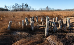 morning in the marsh (jtr27) Tags: dscf4002xl jtr27 fuji fujifilm xt20 samyang rokinon 16mm f2 f20 manualfocus wideangle landscape scarborough marsh saltmarsh maine newengland